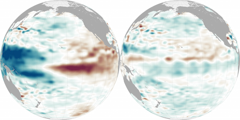 The globe on the left shows a powerful El Niño pattern in the Pacific Ocean on Jan. 18, 2016, near its peak; red indicates higher sea level, a result of warmer water. On the right, from Nov. 4, is the weak La Niña that followed, with blue indicating lower sea level and cooler water. Maps by Jesse Allen, NASA Earth Observatory.